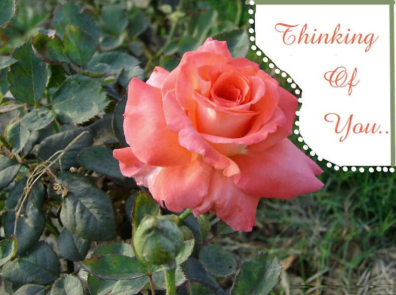 """""""Beautiful Rose Thinking of You Card"""" Greeting Cards by ..."""