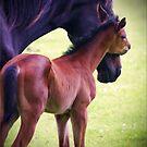 I Love you Mum by Kym Howard