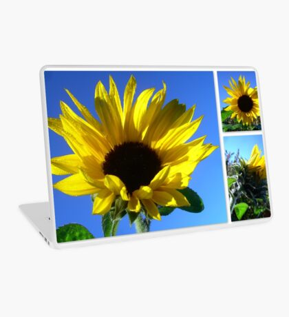 Sunflowers with morning dew  Laptop Skin