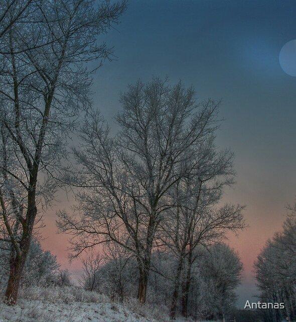 Christmas way by Antanas
