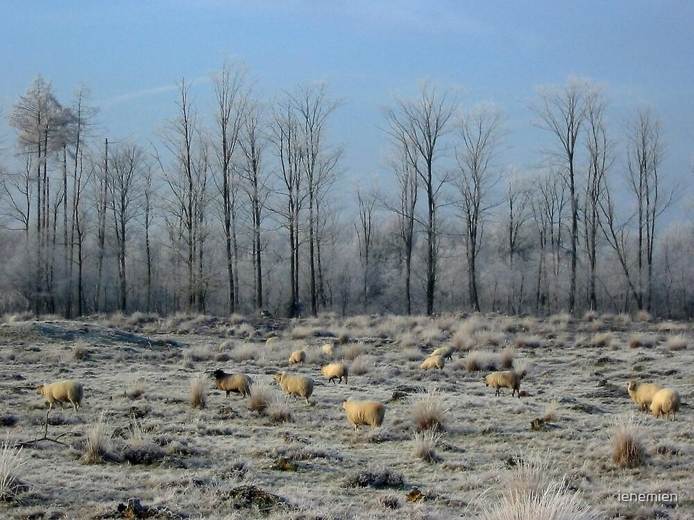 Sheep in Frozen Heatherfield by ienemien