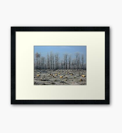 Sheep in Frozen Heatherfield Framed Print