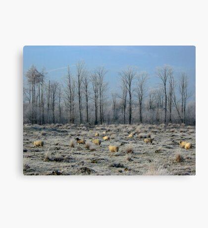 Sheep in Frozen Heatherfield Canvas Print