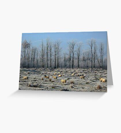 Sheep in Frozen Heatherfield Greeting Card