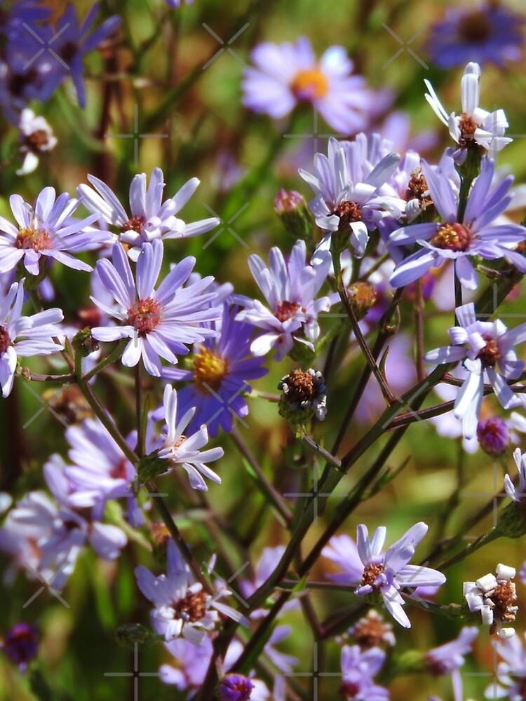 Purple Daisy's by MyWalledlife