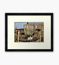 Kitten :) Framed Print