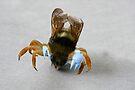 Crabby by Susan Littlefield
