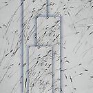 White silence. II by Bluesrose
