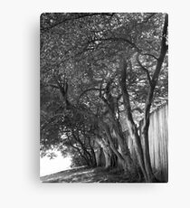 The Shade of a Grassy Knoll Canvas Print