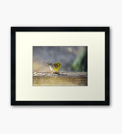 Afternoon Pose Framed Print