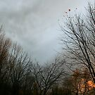 fire in the sky by Kent Tisher