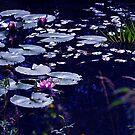 Waterlilies by Aase