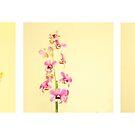Orchid by Marek Novotnak