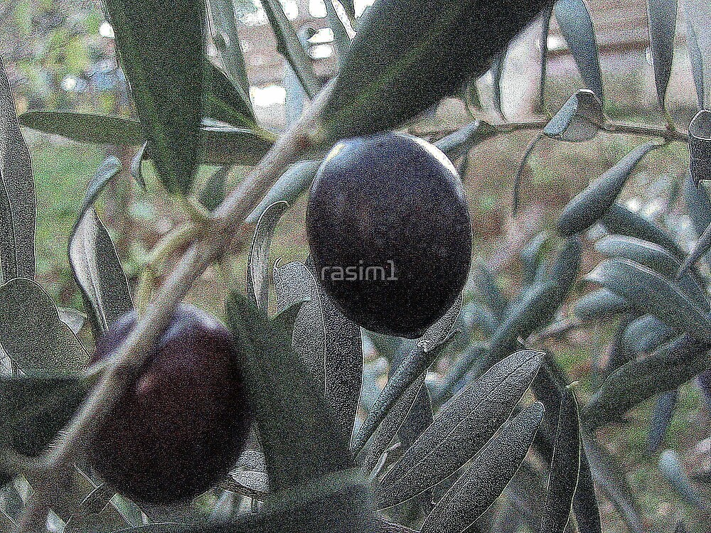 The olives ... by rasim1