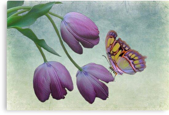 Butterfly Beauty by sunshine0