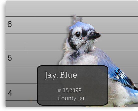 Another Jail Bird by Brian Dodd