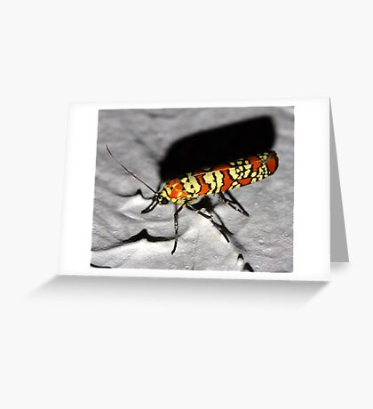 A Bug on my Ceiling   Greeting Card