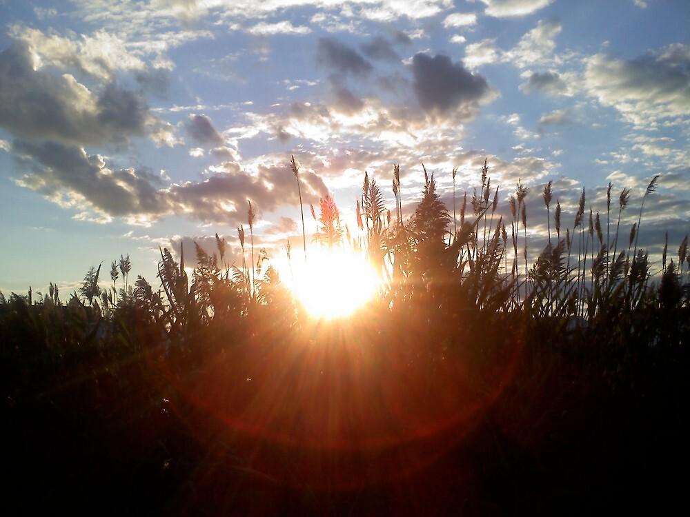preparing for sunset by elh52