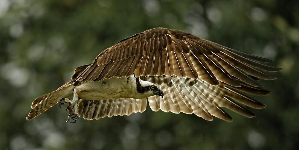 Wings of Desire by Bill Maynard