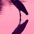 Tri- colored(louisiana)heron in silhouette by Anthony Goldman