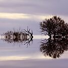 """Reflections"" by Sue  Fellows"