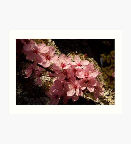 lichen ornamental cherry blossoms Art Print