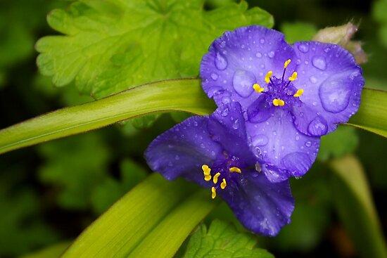 pretty blue pair by dedmanshootn