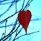 red leaf heart  by TerrillWelch