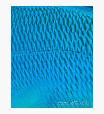 Blue Scale Photographic Print