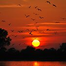 Birds Take Flight At Sunset by Mark Greenwood