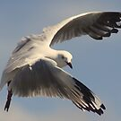 come fly with me !! by Trish Threlfall