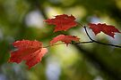 Rain on Fall Leaves - Dunrobin Ontario by Debbie Pinard
