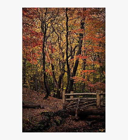 Autumn In The Rambles Photographic Print