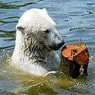 Polar bear with his toy by Arie Koene