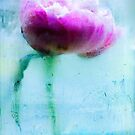 Peony by Suzette McGrath
