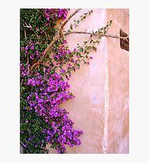 Climbing up the walls... Photographic Print