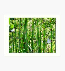 Reeds Along the River Art Print