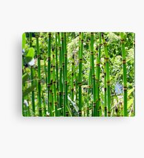 Reeds Along the River Canvas Print