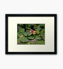 Crown Lily Framed Print