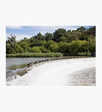 Weir Geese Photographic Print