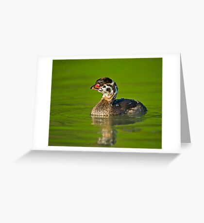 Pretty Pied Greeting Card