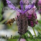 Challenge entry for Lovely Lavendar group by Edge-of-dreams