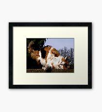 top cat Framed Print