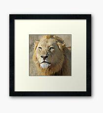 Majingilane lion(I am king!) Framed Print
