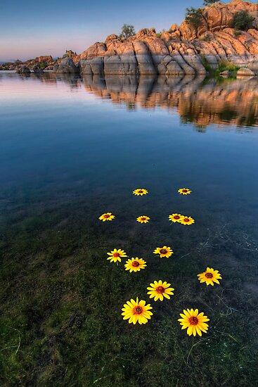 Sunflower Stretch Portrait by Bob Larson