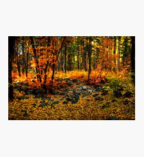 Fall Fantasy  Photographic Print
