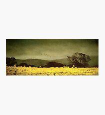 A splendid crop Photographic Print