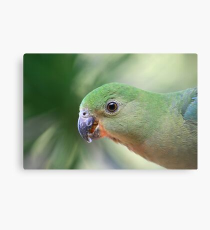 Young Female King Parrot Metal Print