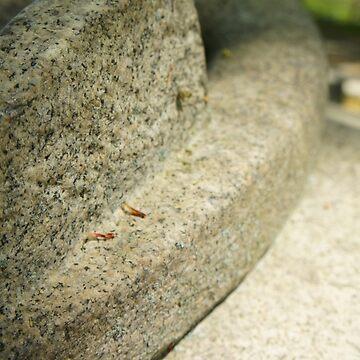 Stone Eleven by colincarlton