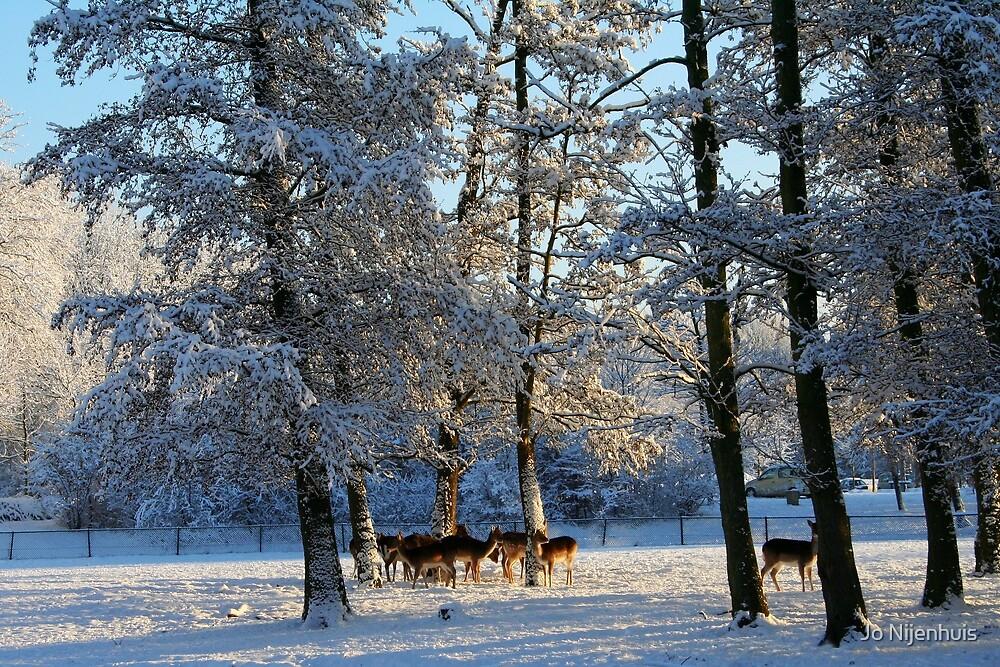 First Snow by Jo Nijenhuis